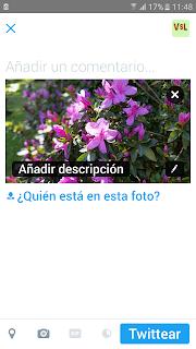 Pantallazo de movil donde aparece una imagen de unas flores y debajo la imagen de añadir descripción