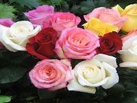 Kamu Pasti Belum Tahu, Apa Saja Makna Dibalik Bunga Mawar