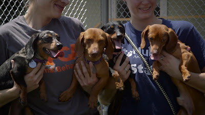 Dachshunds graduate from ASPCA rehab center