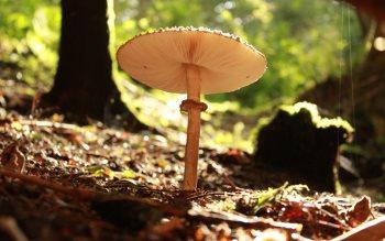 Wallpaper: Forest Mushroom
