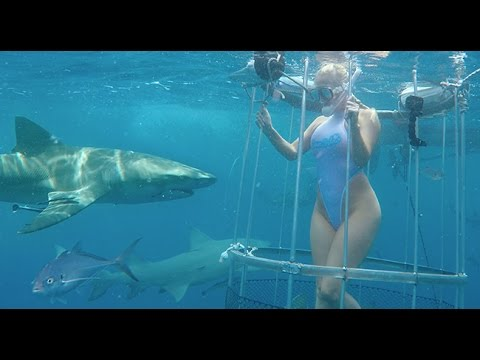 PORN STAR MOLLY CAVALLI BITTEN BY SHARK WHILE IN THE UNDERWATER SHOOT