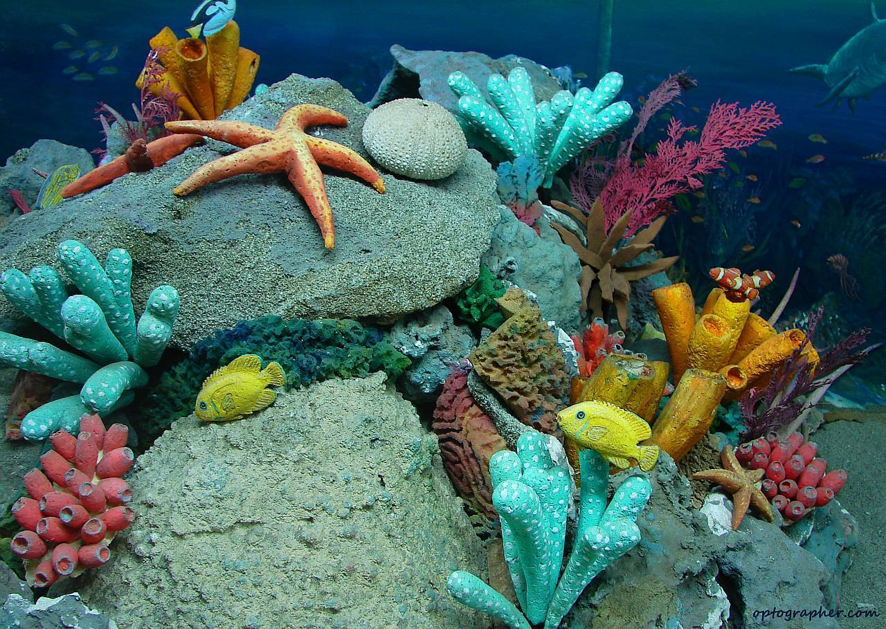 Technology, Cars and Current Events: World's Sea Life Is ...