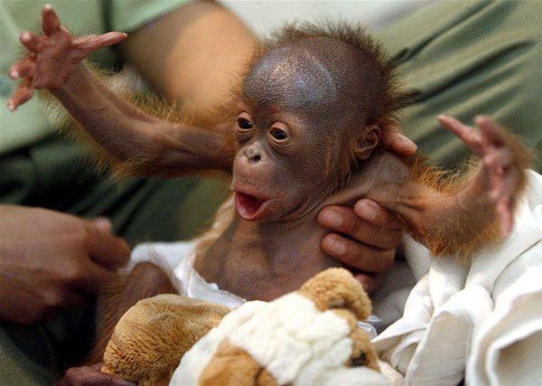 Funny Animals Zone Cute Baby Monkeys