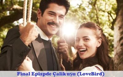 Last Episode Çalıkuşu (Lovebird) – Final Chapter   Full Synopsis