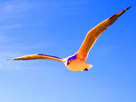 飛翔(素材)