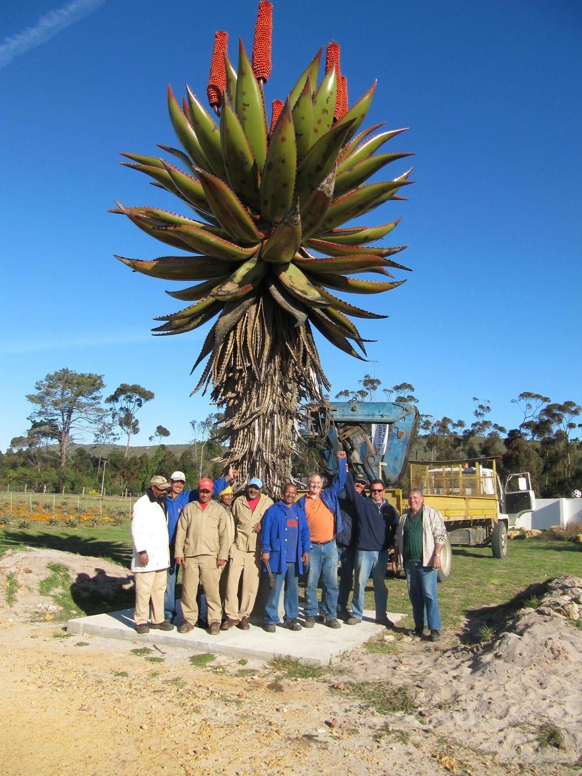 Garden Bush: PlantWerkz: Cape Aloe