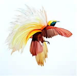 Burung Cendrawasih Paradisaea Apoda Kuning Besar