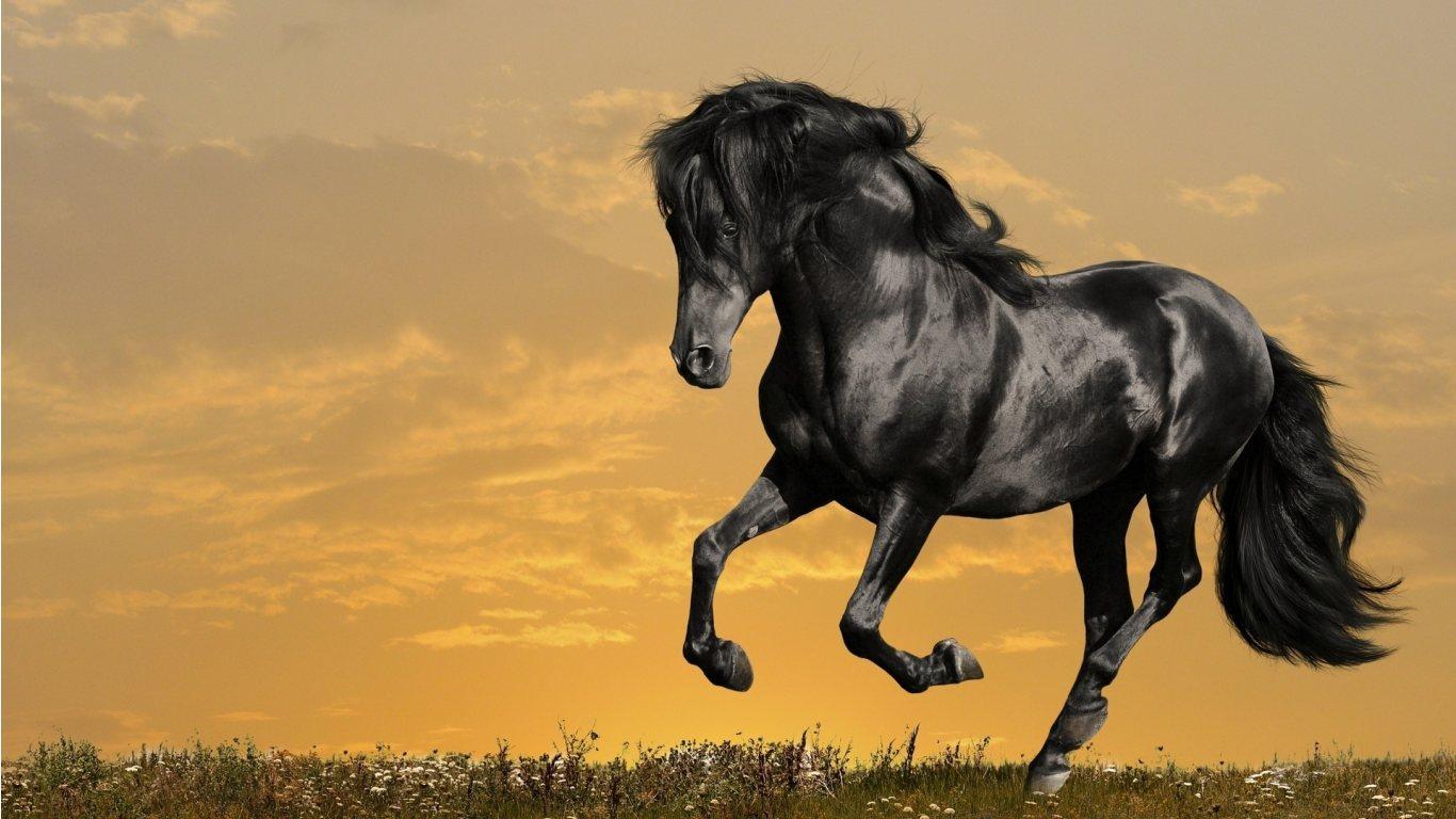 animals zoo park 12 black horse wallpapers black horses