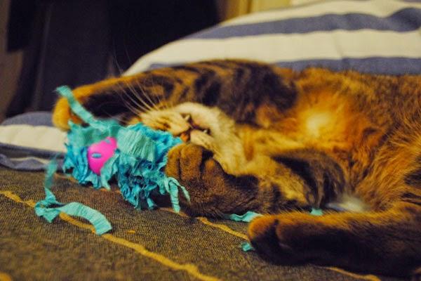 шуршащая игрушка для кота