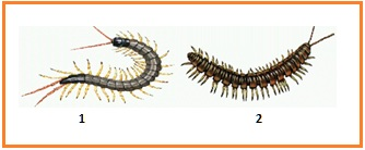 BIOLOGI GONZAGA: February 2019