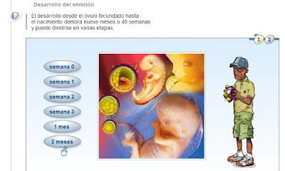 http://www.ceiploreto.es/sugerencias/chile/desarrollo_feto/index.html