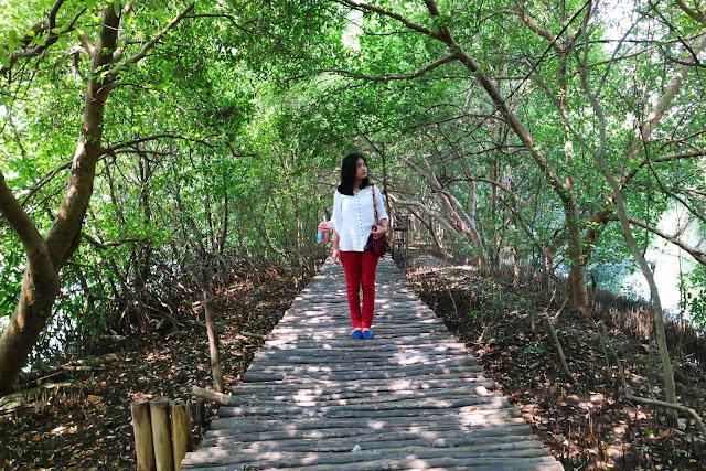 foto suasana hutan mangrove jakarta