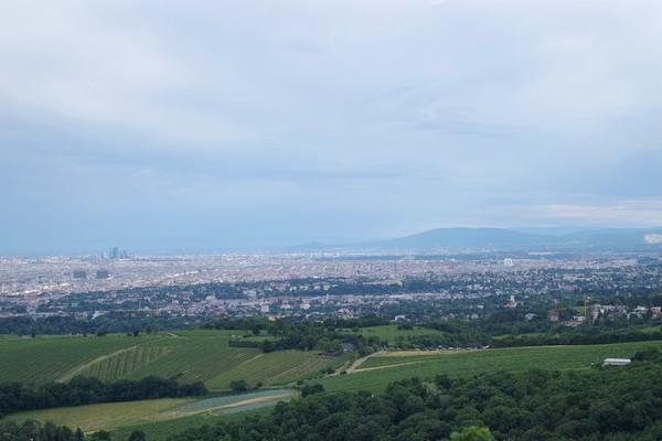 vienne vienna panorama döbling leopoldsberg danube donau vignes 19 arrondissement