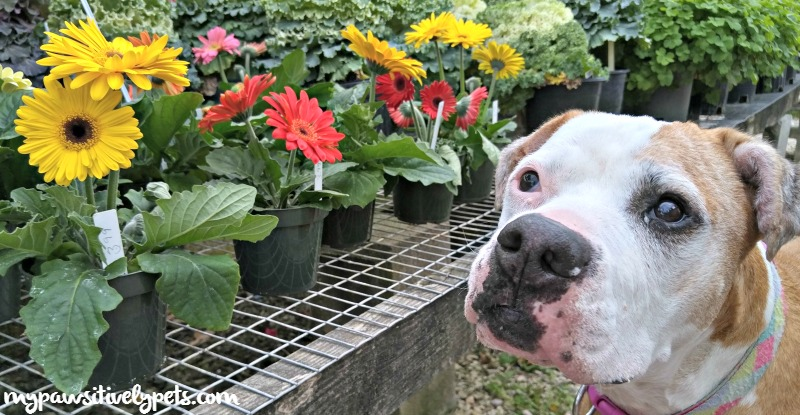 what to plant for a dog friendly garden pawsitively pets