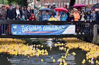 2063 Enten schwimmen um die Wette