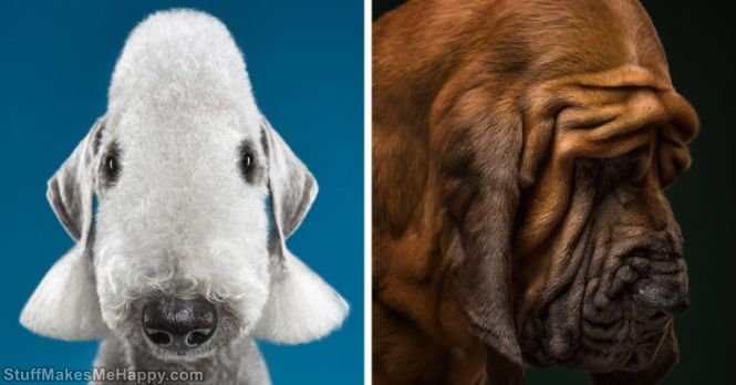 Photographers Make Chic Portraits of Dogs of Different Breeds, Revealing Their Individual Traits