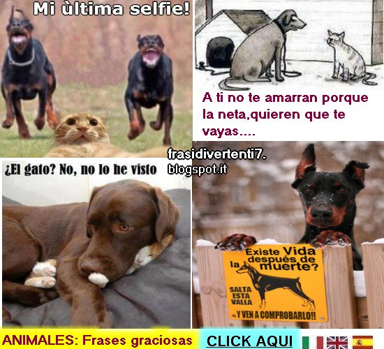 http://frasidivertenti7.blogspot.it/2014/10/chistes-de-animales.html