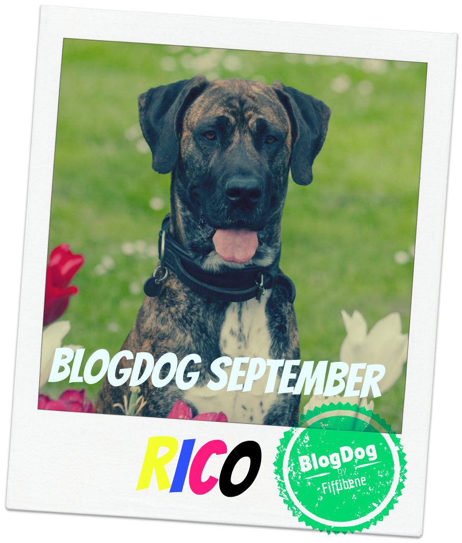 BlogDog Award September 2015