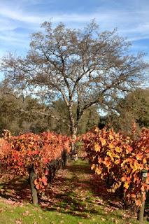 Primitivo of Joy from Eastern Madera County's Westbrook Wine Farm