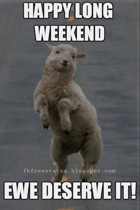 Happy Long Weekend Ewe Deserve It.