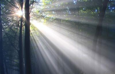 木が生い茂る森の中に光が差す
