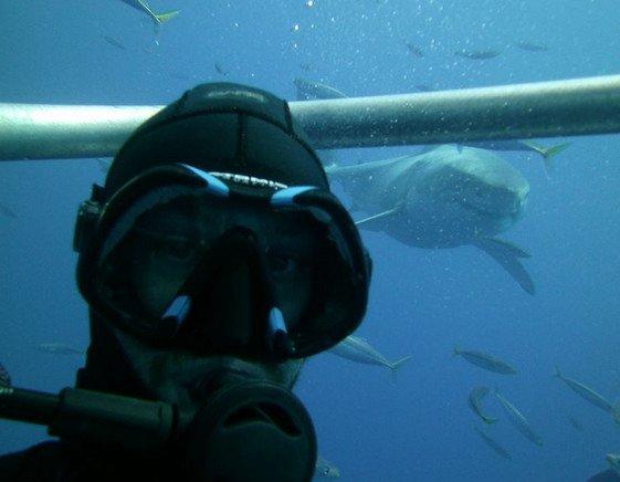 Tirar foto junto com o tubarão