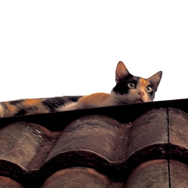 Scary Cat 01