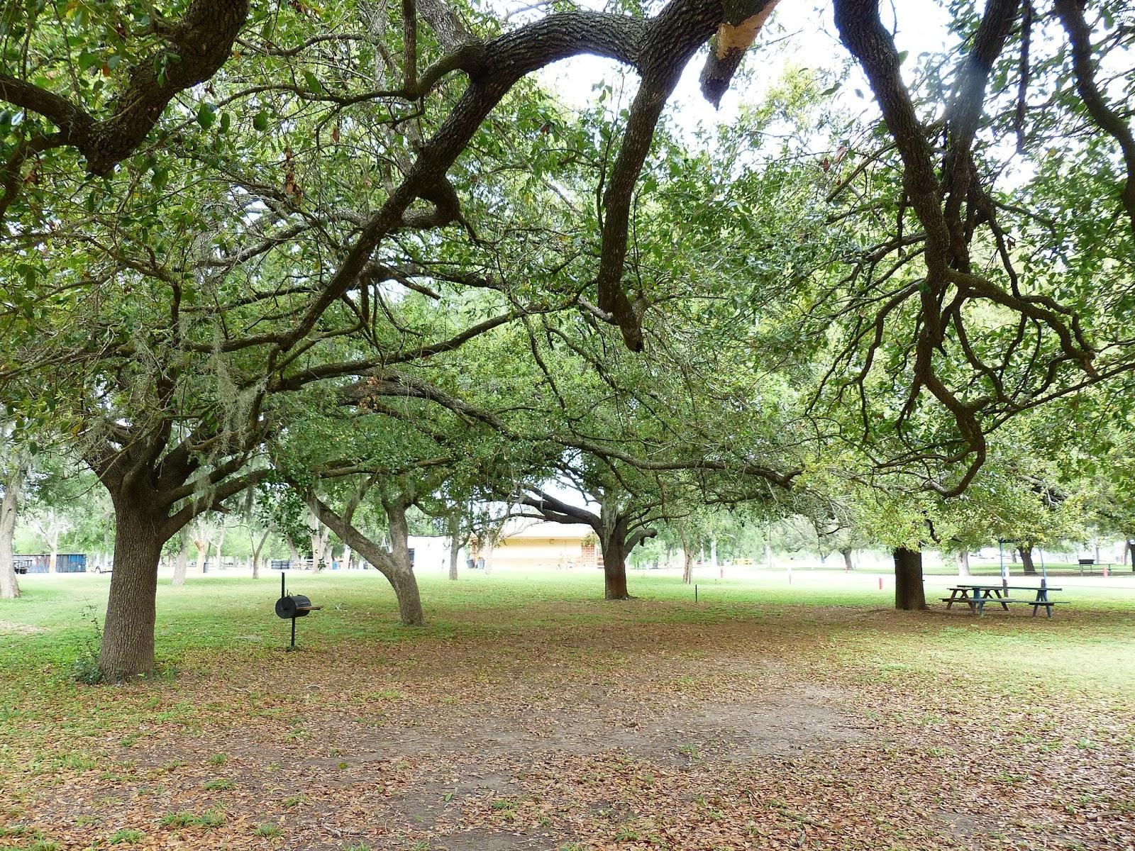 Duffbirder meets South Holderness!: Texas 16 - Tree study!