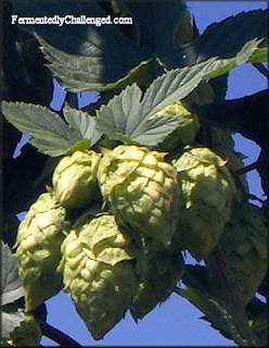 List of Colorado Hop Farms