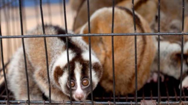 Crean tecnologías para combatir tráfico de animales en Indonesia