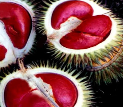 Isi Buah Durian Berwarna Merah