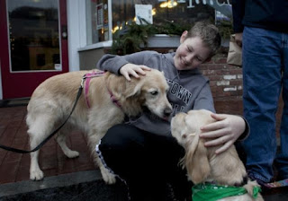 golden retrievers and boy at Newtown