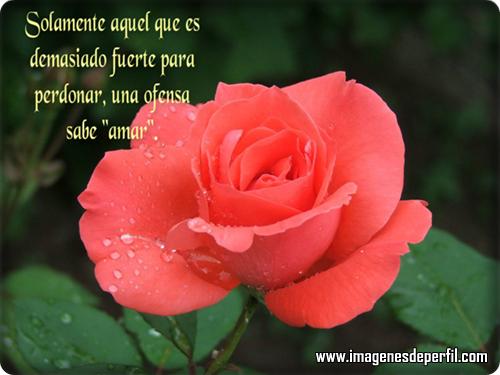 El cuidado de las plantas y el jardin flores y frases - Fotos de flores bonitas ...