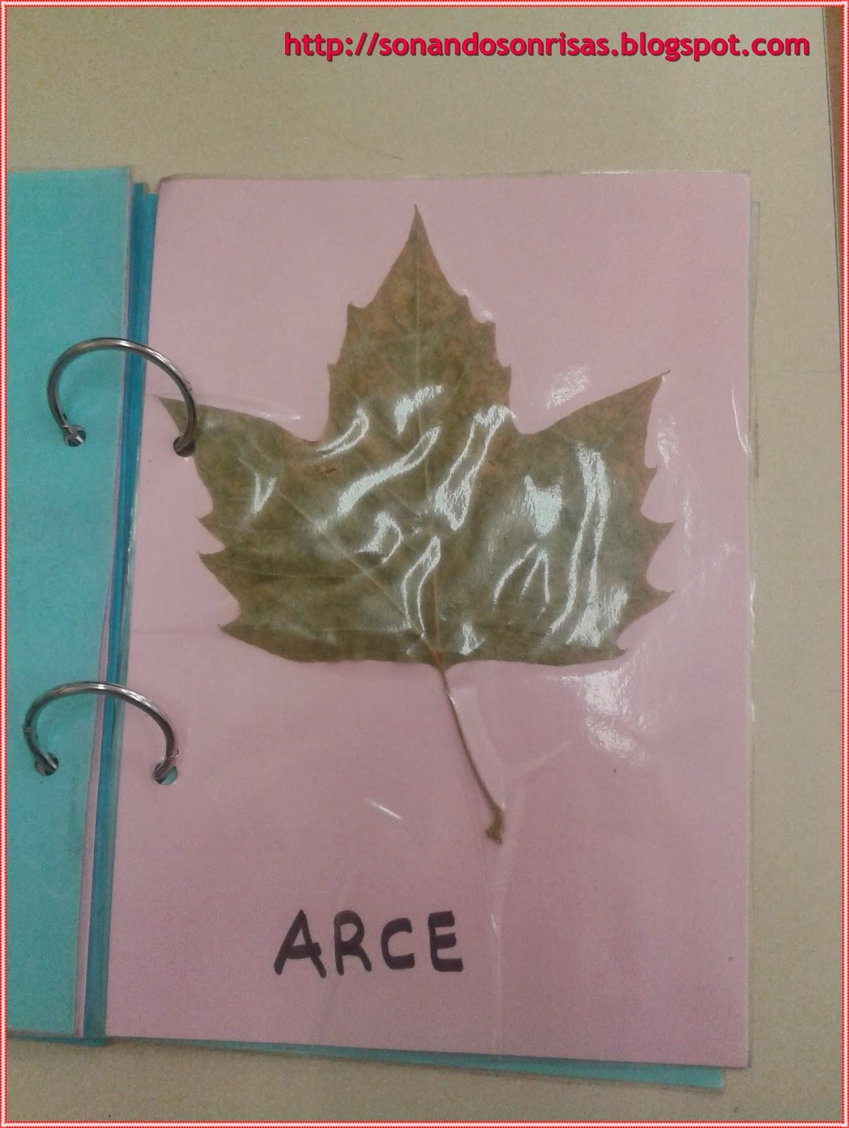 So ando sonrisas hojas de oto o libro de las hojas for Arboles que no pierden sus hojas en otono