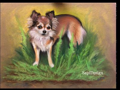 muotokuva koira chihuahua pastelli maalaus SapiDesign