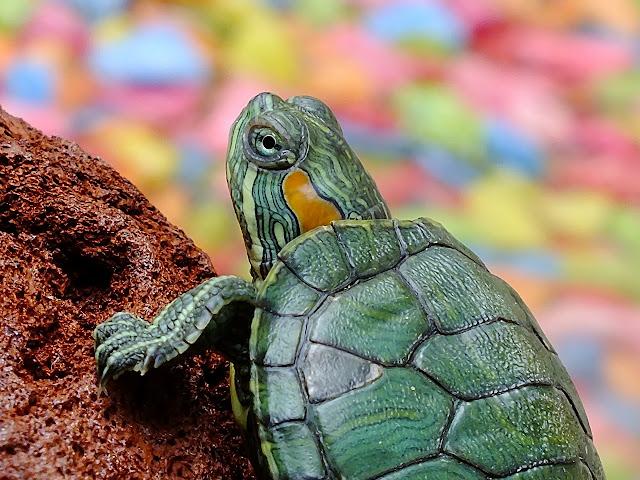 Cara Menghasilkan Banyak Uang dari Blog kura-kura