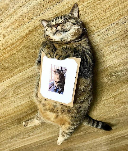 Kucing lucu sedang mimpi indah