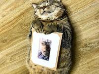 Lucunya Foto Kucing Ini Akan Menghilangkan Stress Yang Sedang Anda Alami.