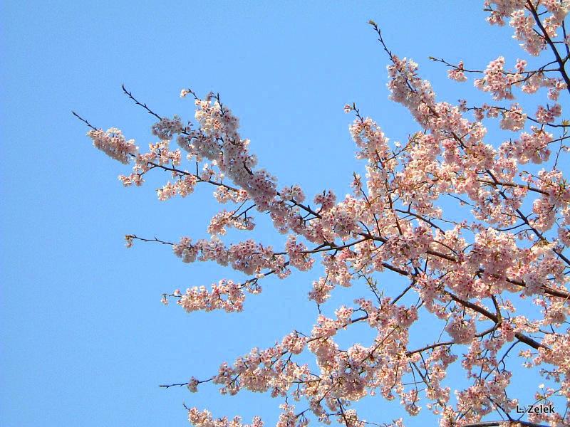 Hamamatsu, Japan - March 2016 Credit Fusako Yamamoto of マミーズアタック