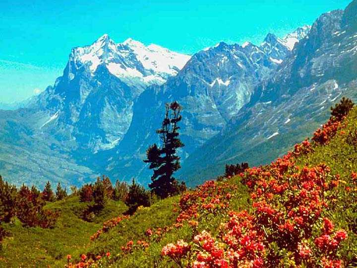 dağ manzaralı çiçek resimleri