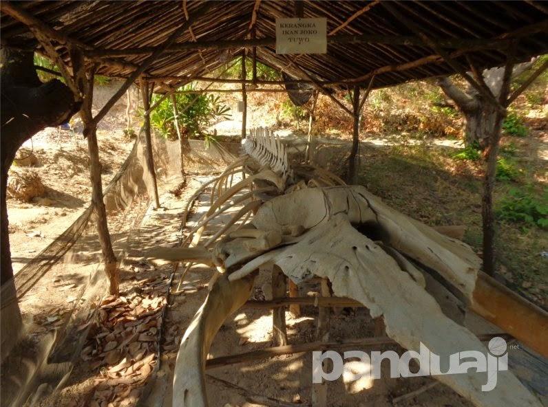 Fosil paus Joko Tuwo