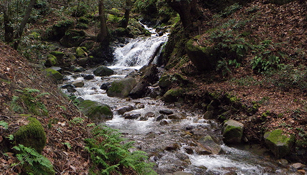 A small falls with significant water flow
