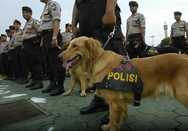 Dua Warga Aceh Lulus Administrasi Sebagai Pawang Anjing BNN