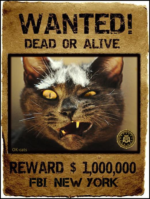 CAT-nipulation • Wanted Dead or Alive • Very dangerous cat • FBI New-York