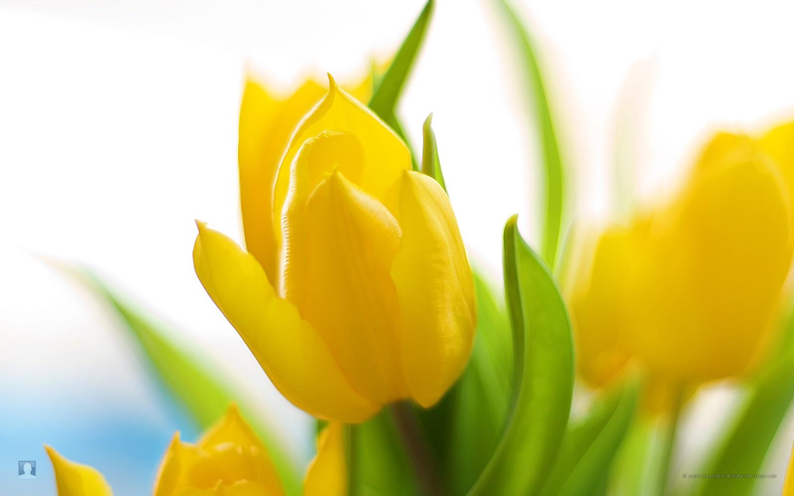 Life Around Us Spring Flowers