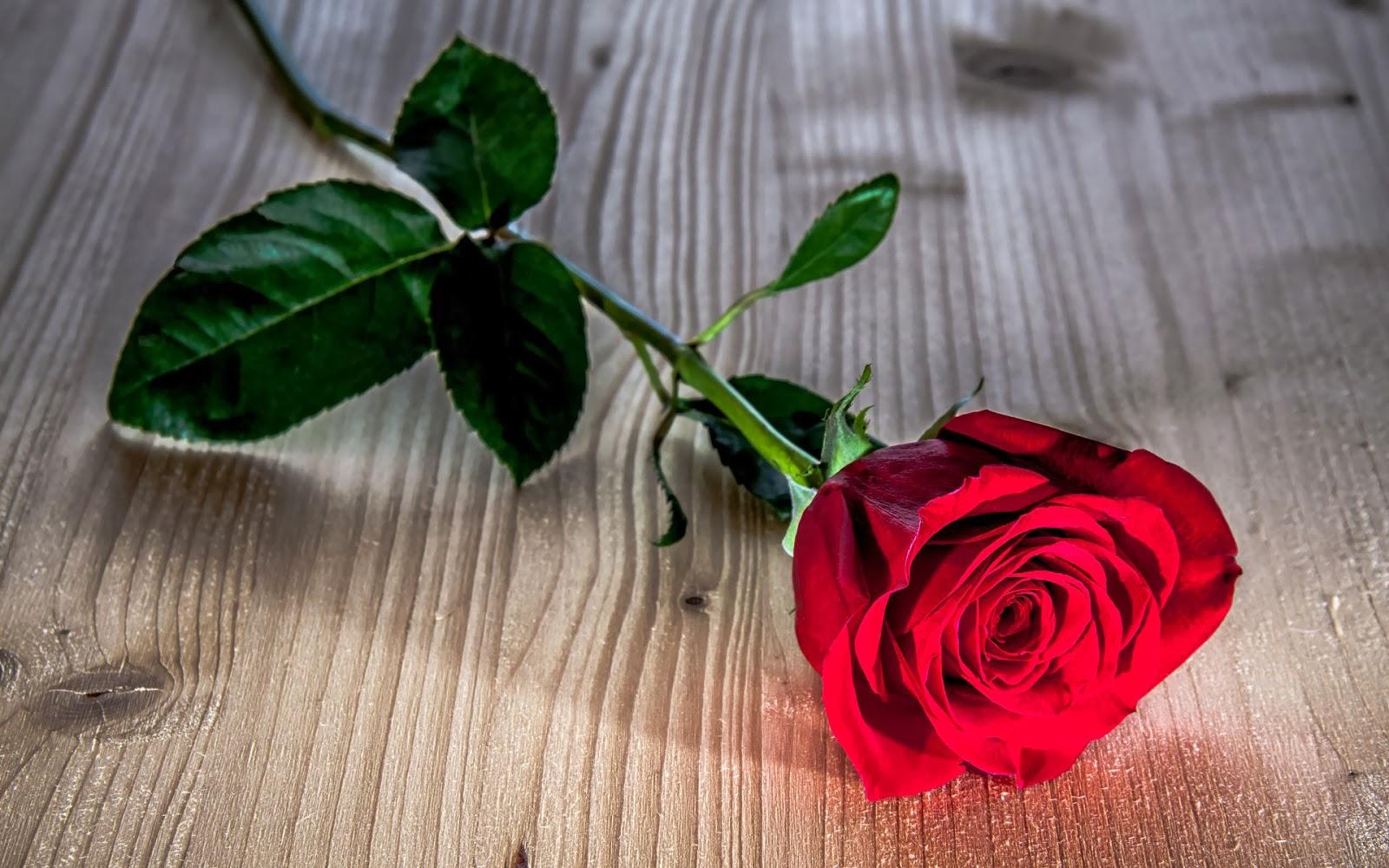 Foto rode roos op hout