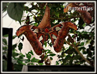 butterfly, butterflies, london zoo, zoo