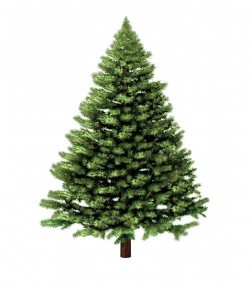 Christmas Tree Pick Up.Shoreline Area News Christmas Tree Pickup At Curbside For