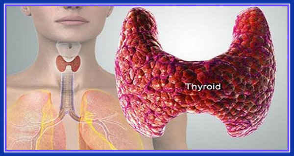Thyroid!