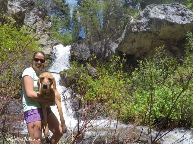 Hiking Deuel Creek in Centerville, Utah, Deuel Creek Waterfall, Hiking in Utah with Dogs, Hiking Centerville Canyon Utah